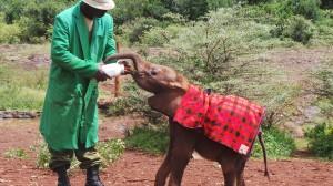 Baby_Elephant_Nairobi