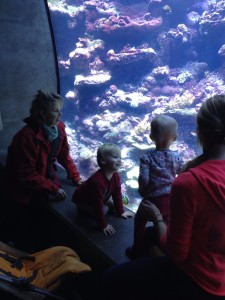 granny and the grandbabies at the California Academy of Sciences