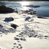 deer_tracks_011715