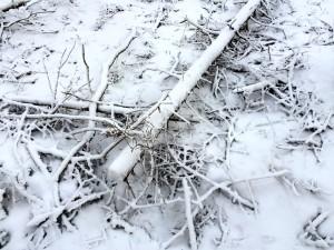 Snowy forest near our house