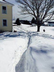 Snowshoveled_path_Feb2015
