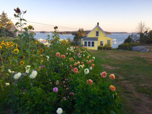 yellow house blooms